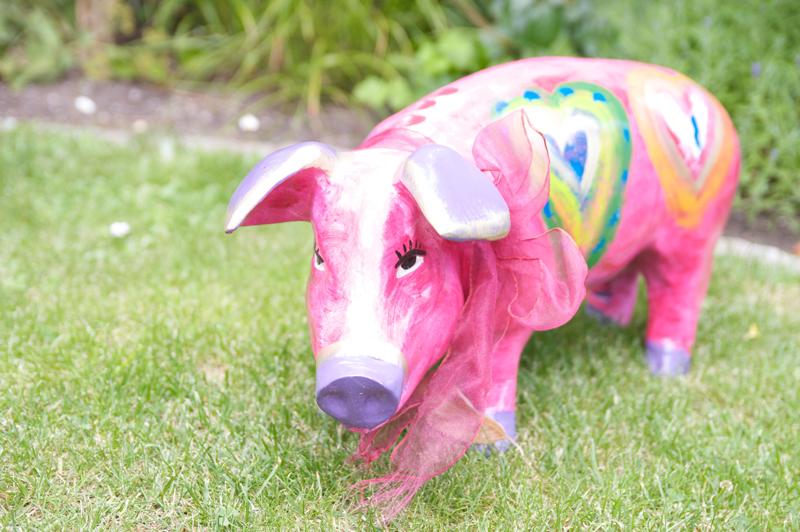 Schwein (Gesicht) - Atomatische Belichtung